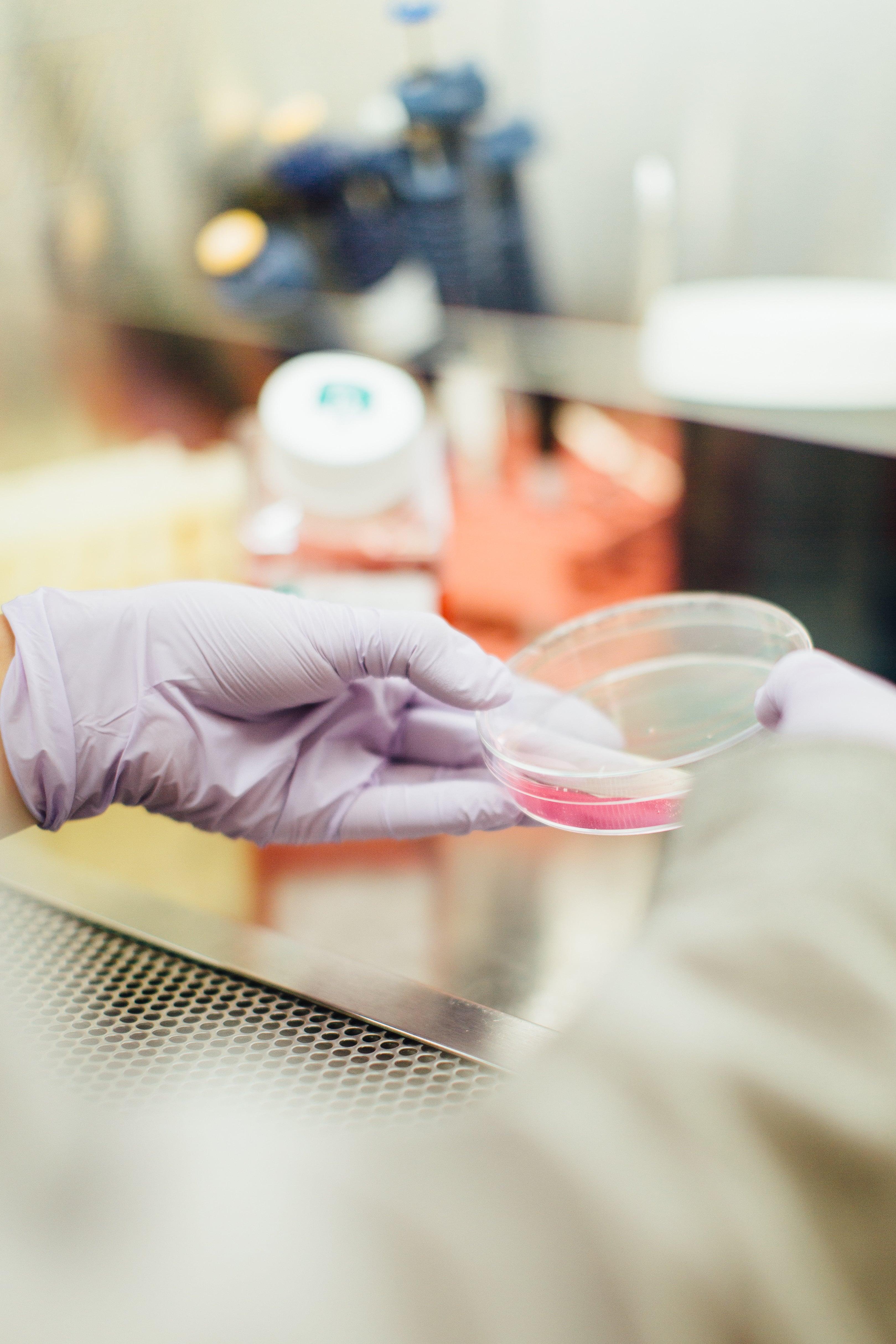 cells science petri dish